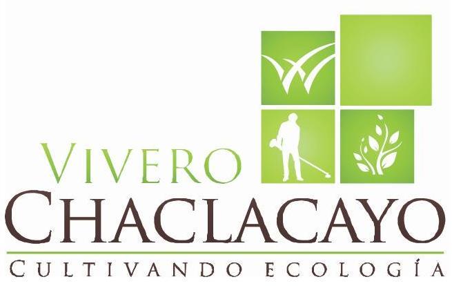 Cipres limon cupressus macrocarpa vivero chaclacayo for Viveros en lima
