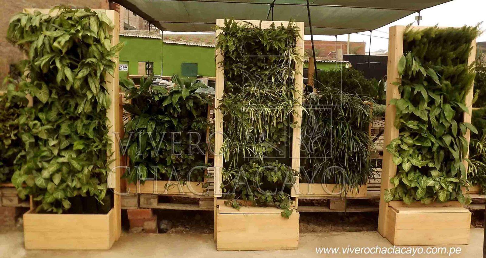 muros vegetales vivero chaclacayo