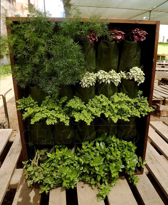 Cuadro vivo simple cuadro vegetal vivero chaclacayo - Plantas verdes exterior ...