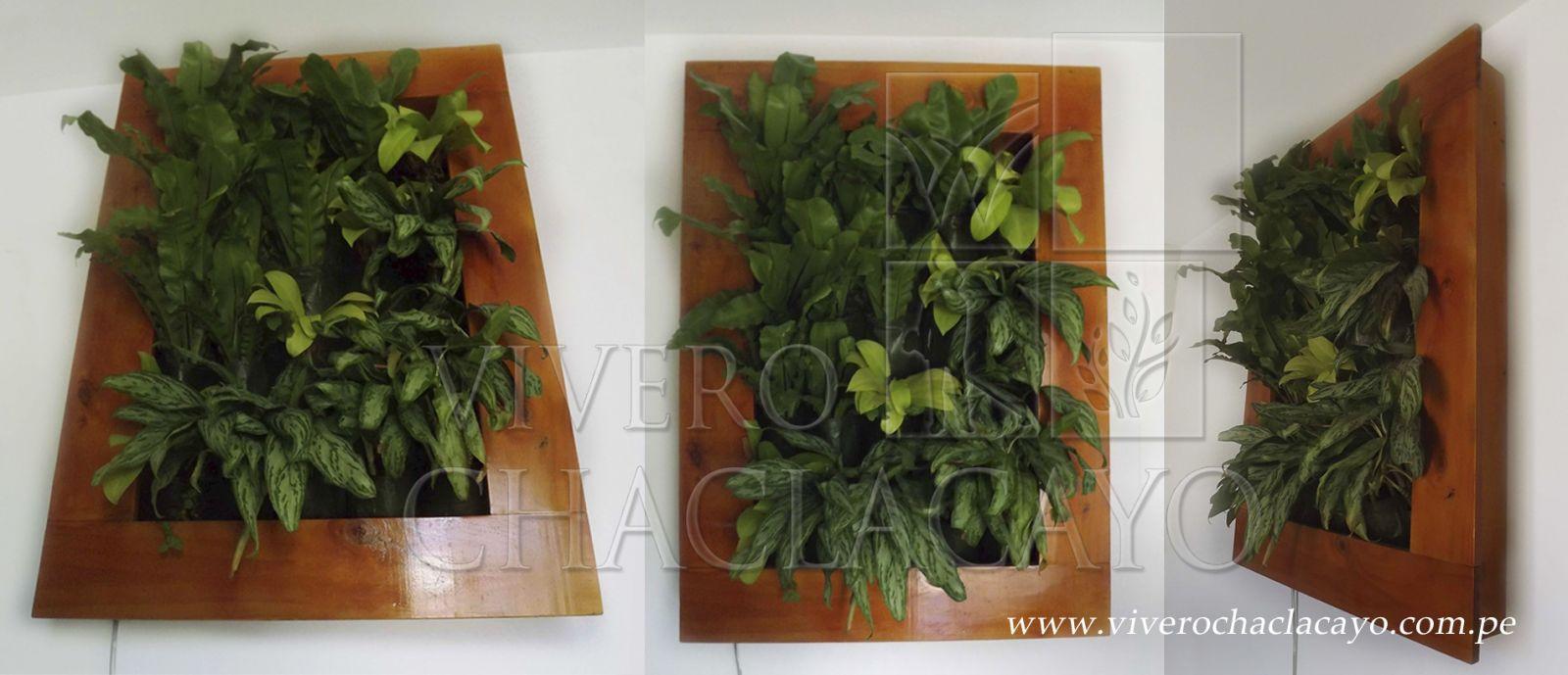 Cuadros vegetales vivero chaclacayo for Cuadros para el jardin