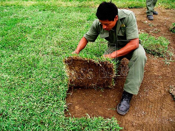 Instalaci n de grass en jardines y azoteas vivero chaclacayo for Tipos de cesped natural para jardin
