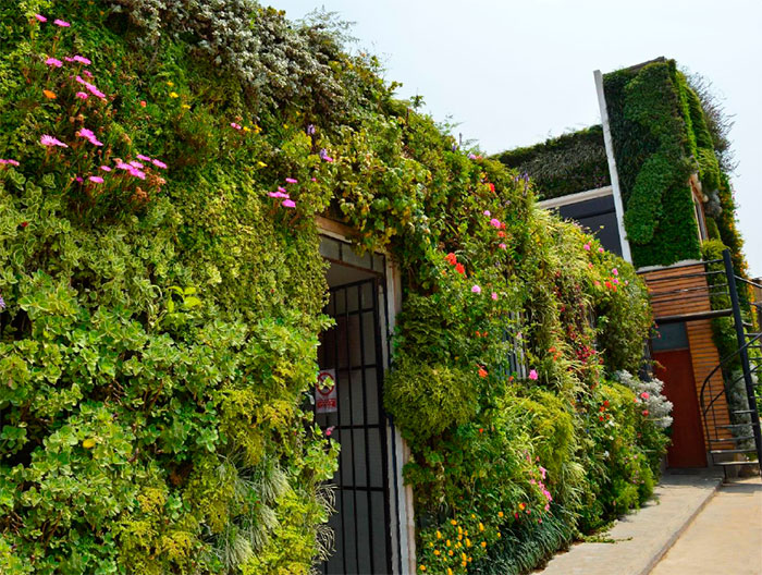 Jardines verticales y muros verdes vivero chaclacayo for Plantas recomendadas para jardin vertical