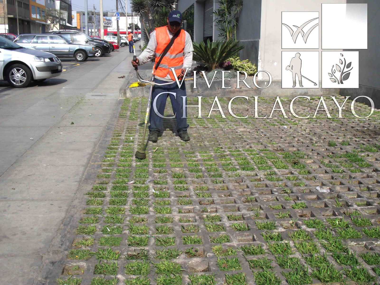 Mantenimiento de reas verde miraflores lima vivero for Viveros en lima