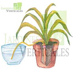 Como regar las plantas en vacaciones vivero chaclacayo for Riego por goteo casero