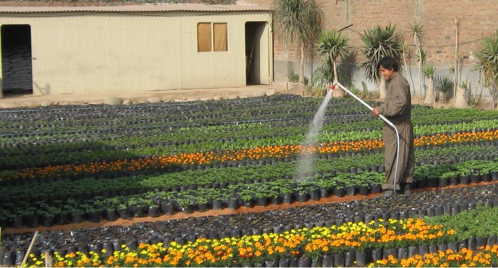 Envio de flores de estacion vivero chaclacayo for Plantas de vivero