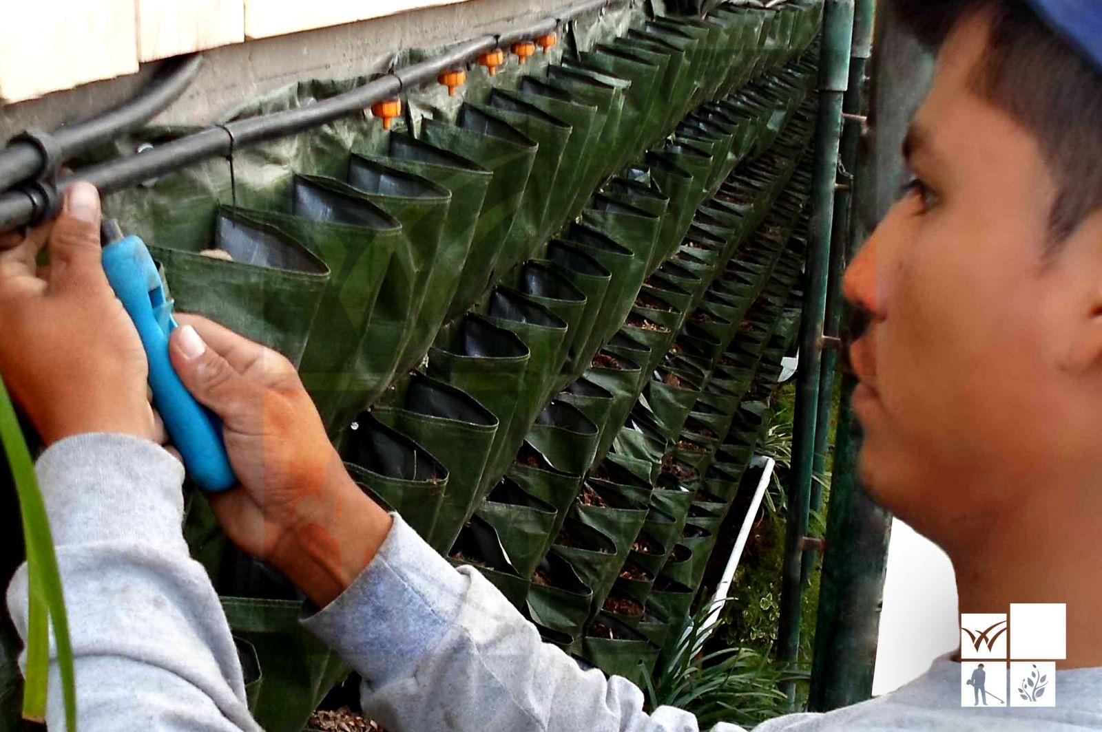 Como hacer un jard n vertical casero vivero chaclacayo for Riego de jardines